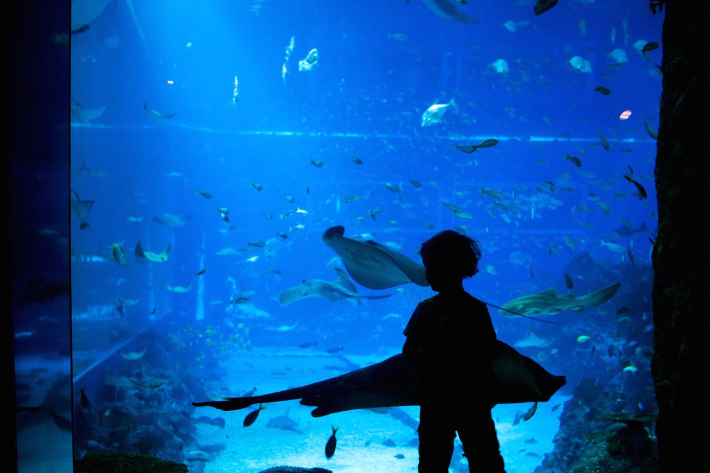 Akvarijum Singapur, Tamara Zidar